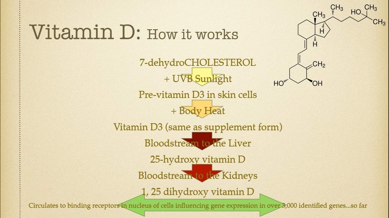 How Vitamin D Works